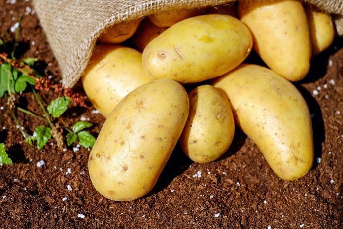 Hasta agora, l'orixe de la pataca documentárase namás utilizando aproximamientos históricos. / PIXABAY